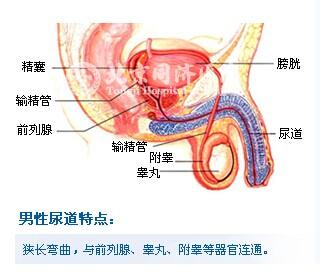 炎症 尿道 男性の「尿の出口が痛い!」排尿痛は、自然治癒する?市販薬は?【医師監修】